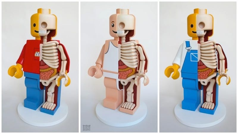 Illustration for article titled These sculptures reveal the muscles, bones, and organs inside toys