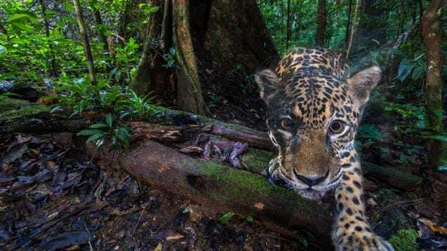 Google s New AI Project Could Be a Conservation Game Changer