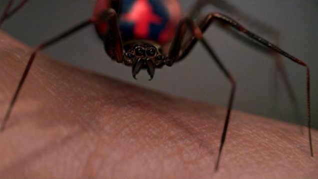 Spider Evolution Should Make You Even More Terrified Of Spiders