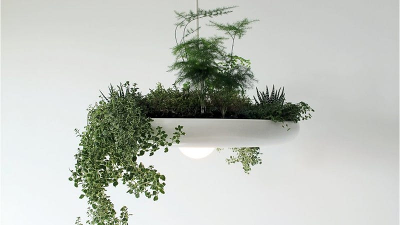 Illustration for article titled Clever Light Fixture Brings Hanging Gardens to Your Home