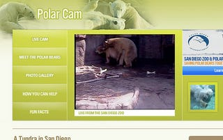 Illustration for article titled San Diego Polar Bear Cam Showing Porn