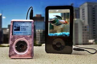 Illustration for article titled iPond Combines Portable Speaker With a Fish Tank, Enrages Animal Rights Activists