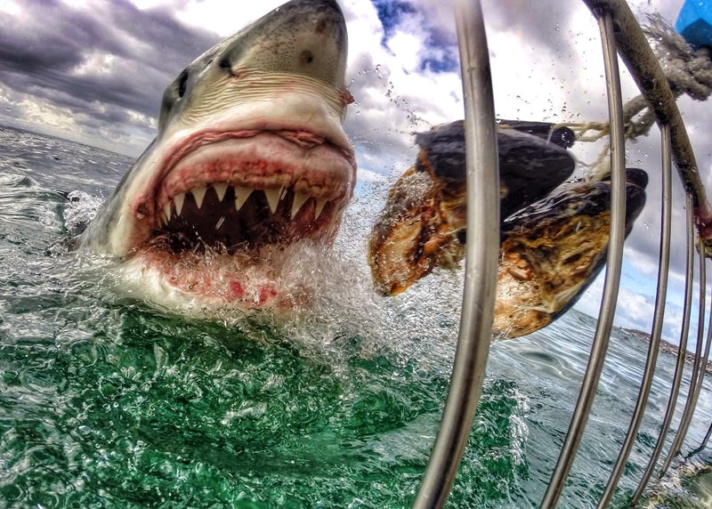 Illustration for article titled Insane close-up photo of a white shark will give me nightmares forever