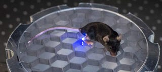Illustration for article titled This Mouse Can Be Wirelessly Controlled With LED Light
