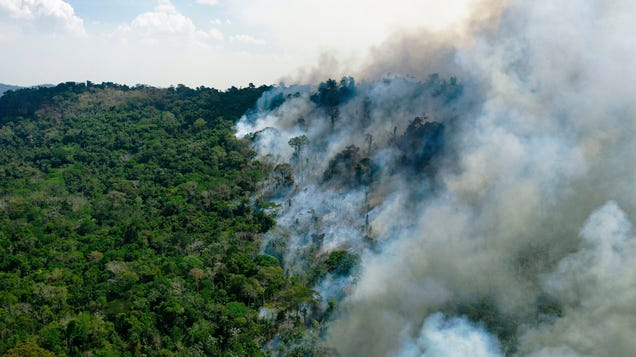 Shocking Findings Show the Amazon May Already Be a Greenhouse Gas Emitter