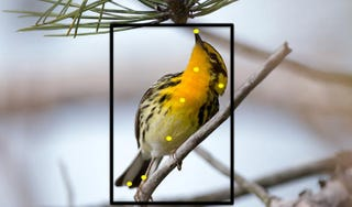 Illustration for article titled This Handy Web-Based Tool is Like Facial Recognition for Birds