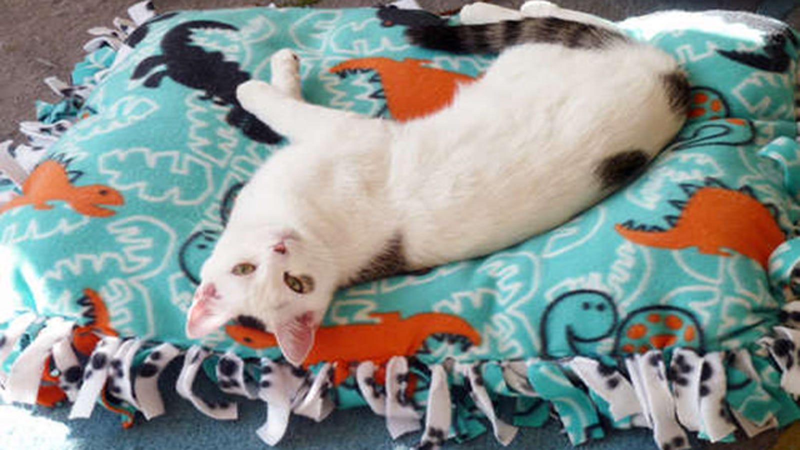 Make a No-Sew Pet Bed