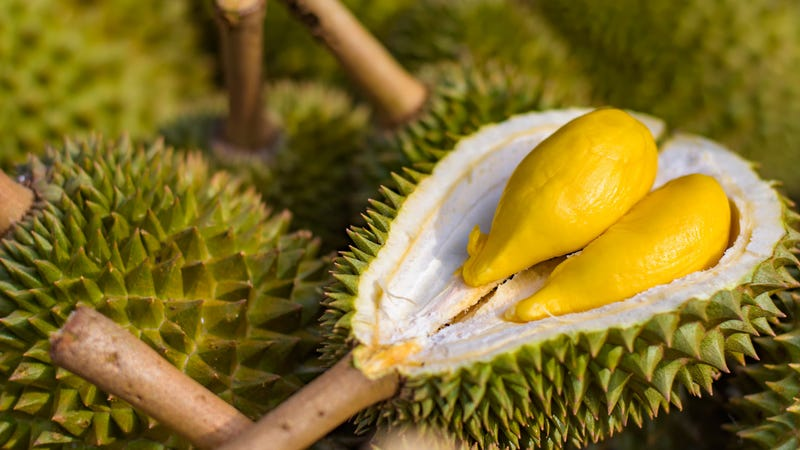 Durian reeks havoc, forces evacuation of university library