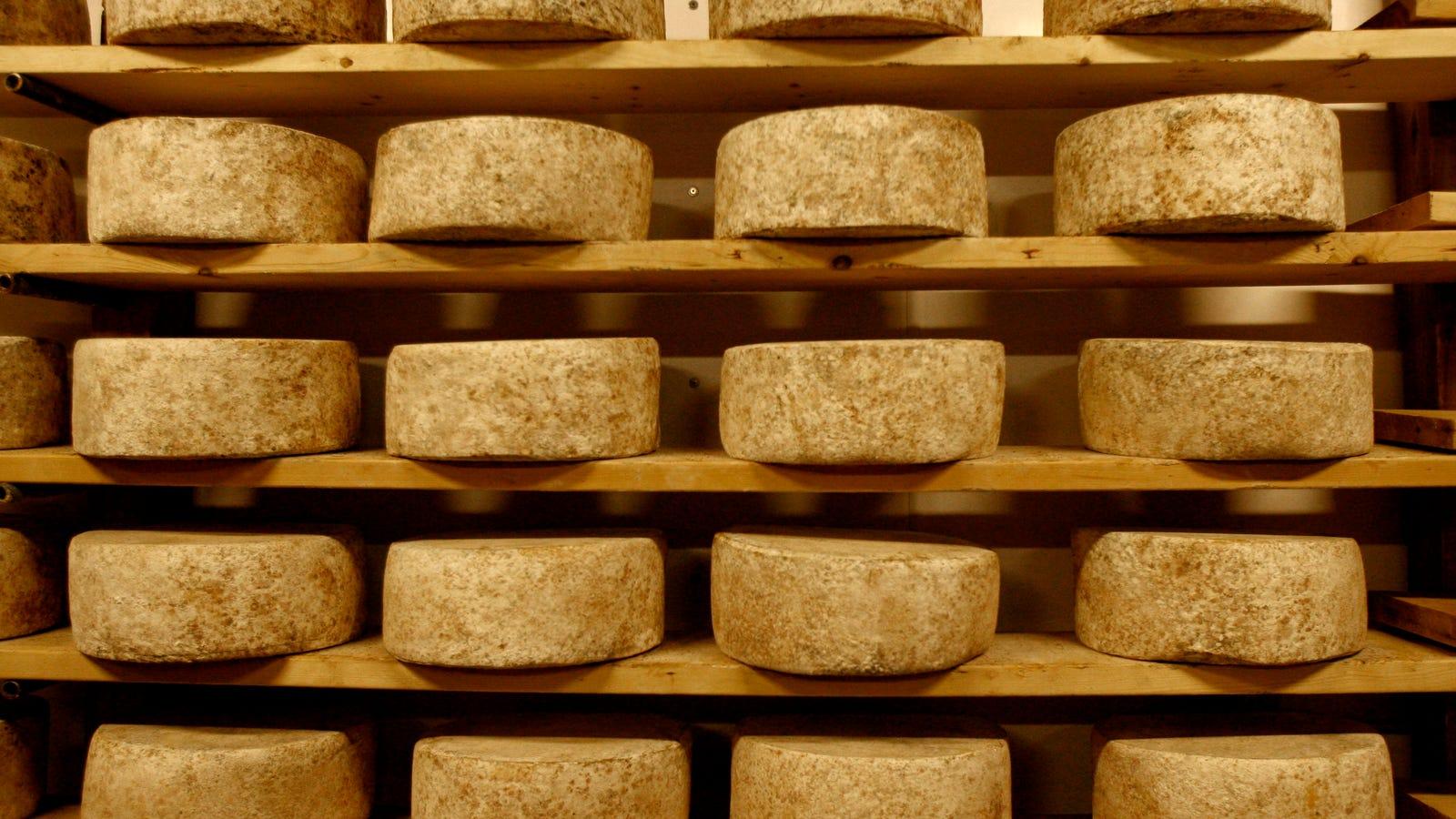 is raw milk cheese dangerous
