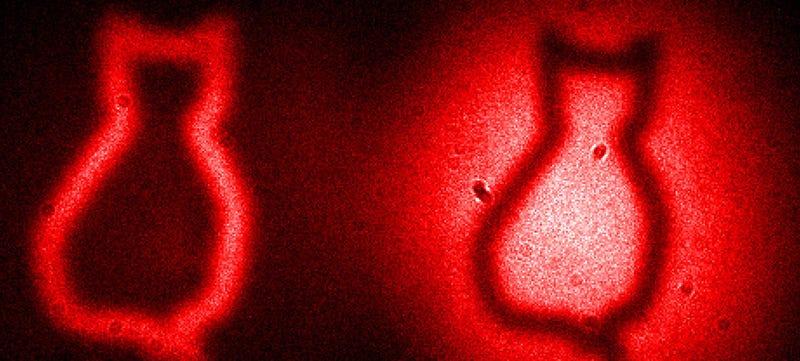 Illustration for article titled El gato (imaginario) de Schrödinger, captado en cámara