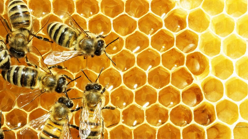 Illustration for article titled Woman's Apartment Is Secretly Overrun by Bees