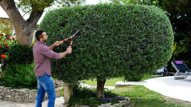 Illustration for article titled Sorry, Horny Boys, But These 7 Curvaceous Topiaries Are Pretty Much The Sexiest Thing We Can Get Through Your Middle School's Content Filters