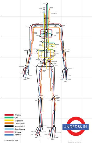 Illustration for article titled A Map of the Human Body