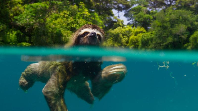 Sloth in the water! Sloth in the water! (Photo: BBC 2016)