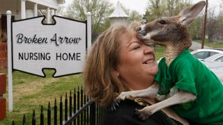 Illustration for article titled City Votes To Let Woman Keep Therapy Kangaroo