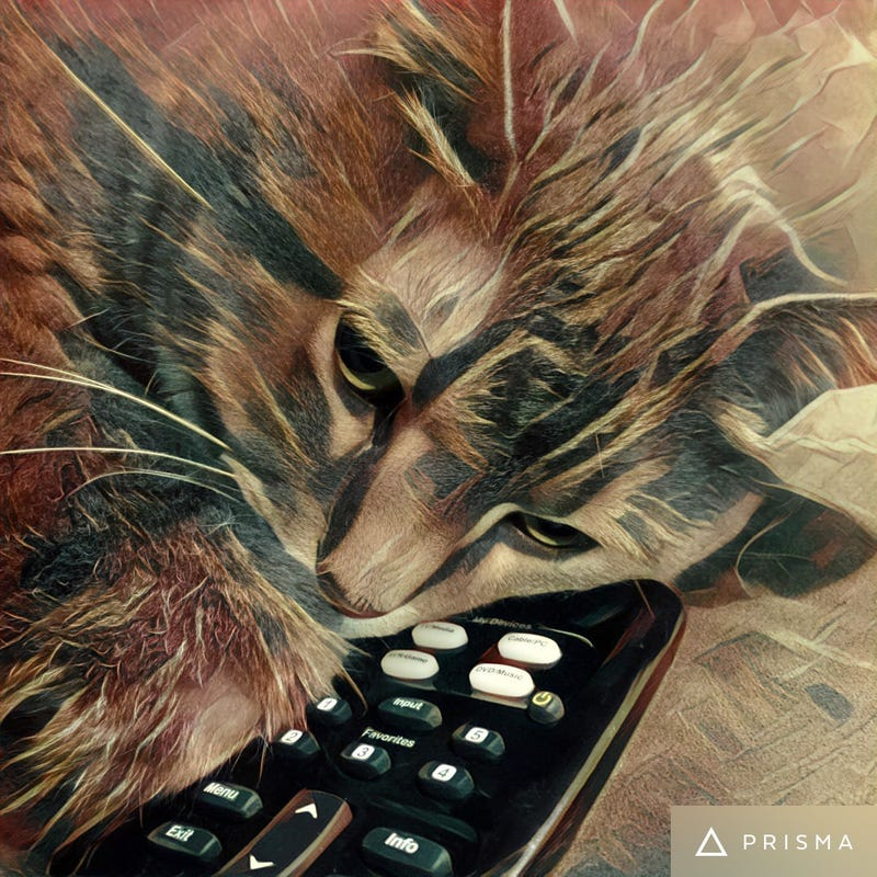 Illustration for article titled Cat