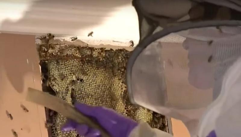 Illustration for article titled Qué ocurre cuando descubres una colmena con 30.000 abejas agresivas en tu propia casa