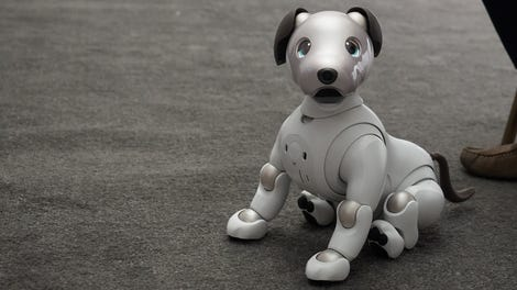 Sony's Aibo Is One Dumb Dog (So Far   )