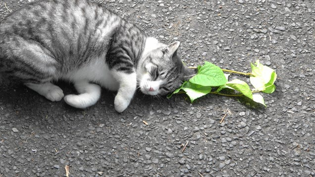 Cats Love Catnip Because It Protects Them From Mosquitoes, New Research Suggests