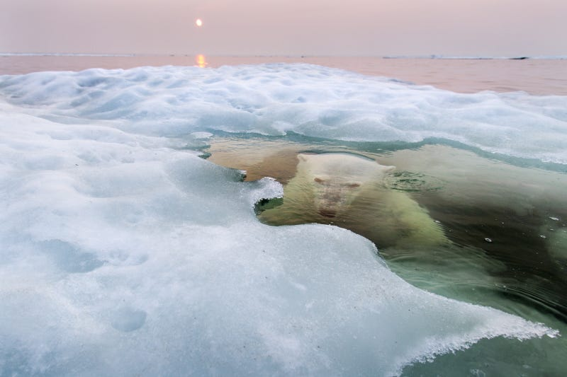 Illustration for article titled The best nature photo of the year is this badass polar bear