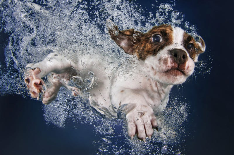 Illustration for article titled There's NOTHING cuter than these puppies swimming underwater