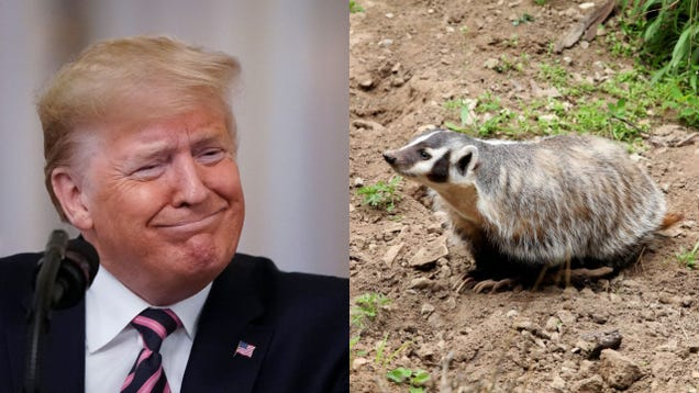 New book accidentally humanizes Trump by showing he's more interested in badgers than doing his job