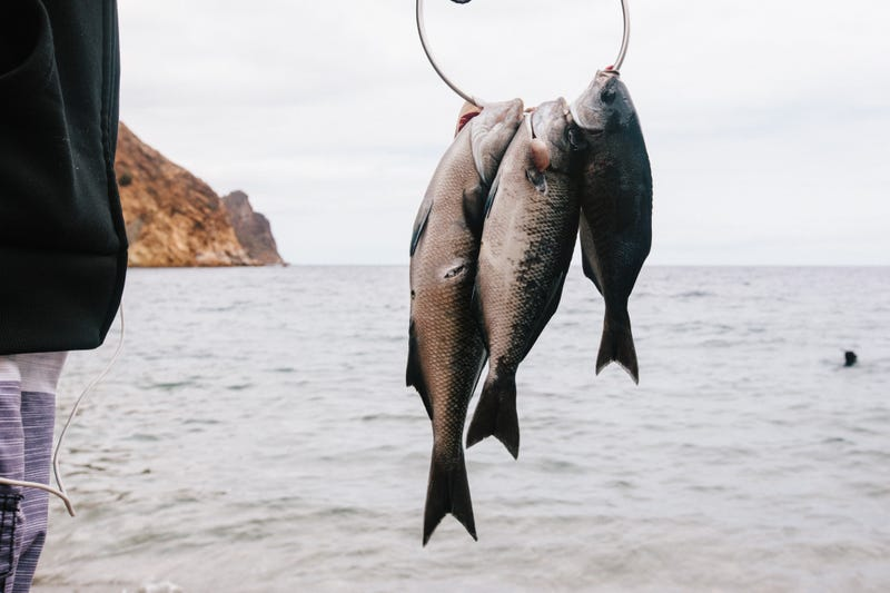 So You Want To Go Spearfishing For The Very First Time