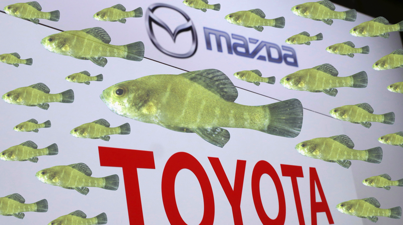 A banner from the announcement on the Toyota-Mazda plant and the spring pygmy sunfish.
