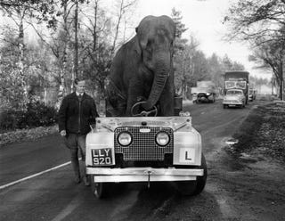 Illustration for article titled Here's An Elephant Driving A Land Rover