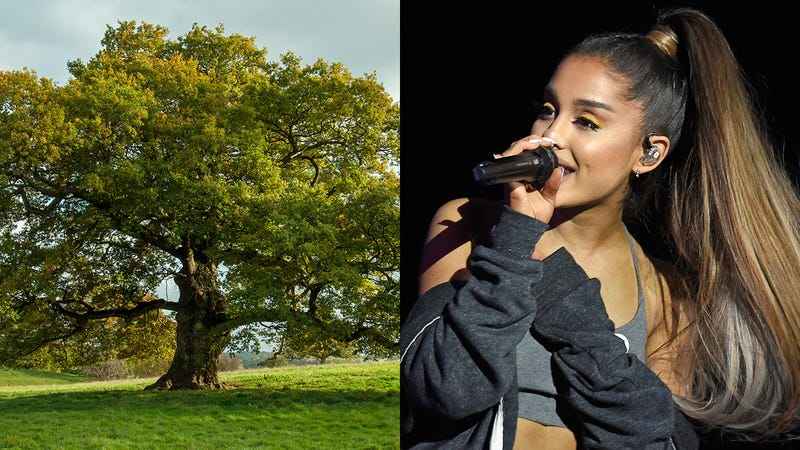 Illustration for article titled Epic Clapback: Ariana Grande Has Responded To Online Trolls By Transforming Into A Sturdy Oak Tree That Can Neither See Nor Hear Their Taunts