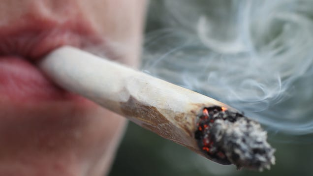 There Sure Is a Lot of Poop in Weed, Study Says