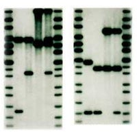 Illustration for article titled Fabricate Your Own DNA Evidence