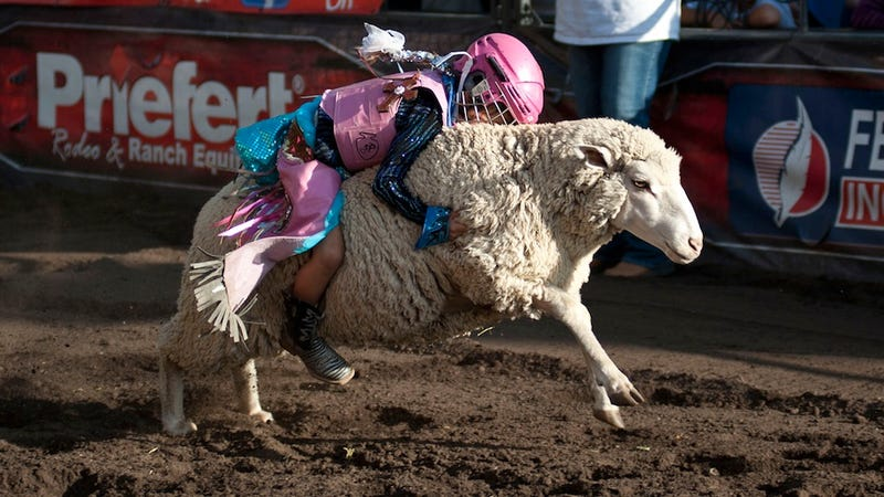 """Illustration for article titled Don't You Dare Call Mutton Bustin' """"Wool Riding"""""""