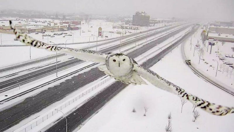 Canadian Traffic Camera Turns Out To Be Pretty Good Wildlife Photographer