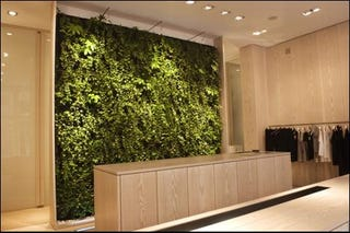 Illustration for article titled Indoor Plantwall Puts Bloggers Back in Touch with Nature