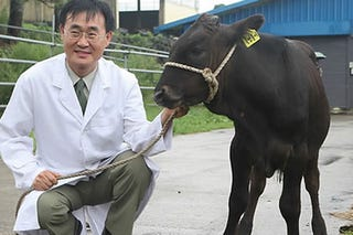 Illustration for article titled Cloned cow charges 'creator'