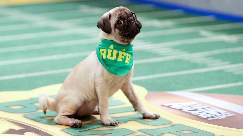 Illustration for article titled Plexiglas, poop, and penguins: Life behind the scenes on the Puppy Bowl