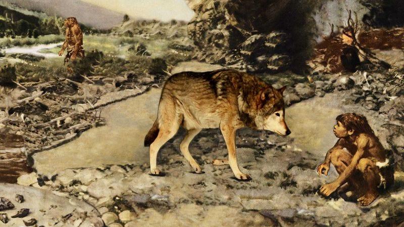 Study Humans Began Domesticating Animals To Comfort
