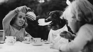 A celebrity dog named Bob holds up his cup for a refill at a children's tea party in London. England, 1937.