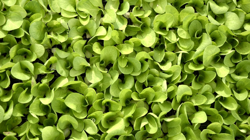 It's Time to Stop Eating Bagged Salads [Updated]