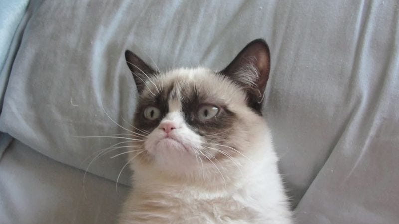 Illustration for article titled Grumpy Cat earns less than $100 million but still more than you