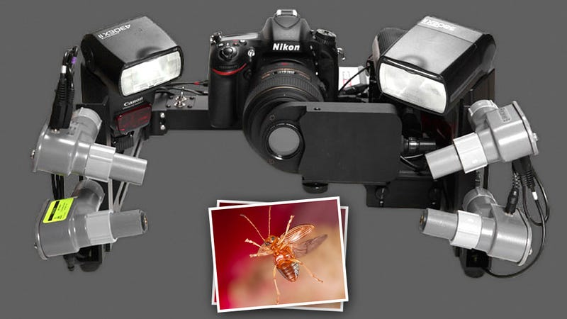 Illustration for article titled This Laser Shutter Photography Rig Freezes Insects In Flight
