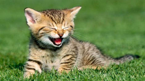 Cats Eating Earwax
