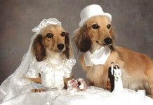 Illustration for article titled Puppy + Weddings= Bad Idea, WEtv • Indian Widow Throws Totally Bangin' End-Of-Life Bash