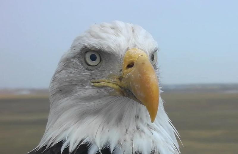 Illustration for article titled Eaglelopnik