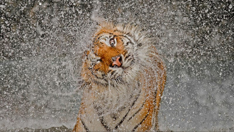 Illustration for article titled The winning images from Nat Geo's 2012 Photography Competition will blow you away