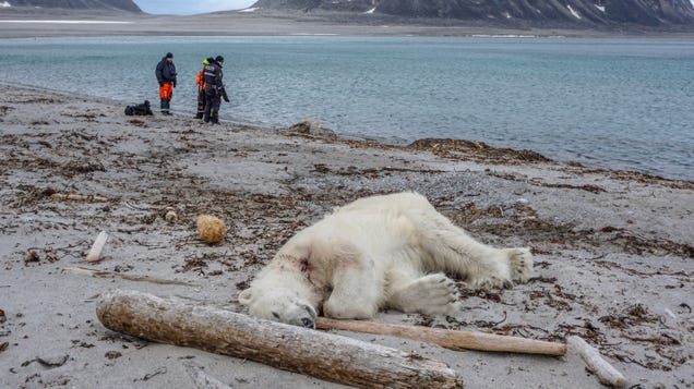 Arctic Cruise Line Staff Reportedly Shoot And Kill Polar Bear After