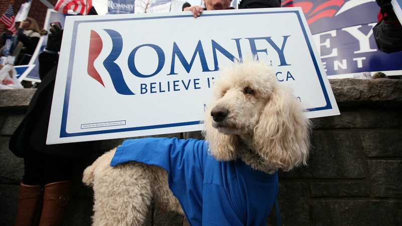 Illustration for article titled Activists Will Tailgate Mittens Romney's Campaign Bus With A Stuffed Dog On The Roof Of Their Car