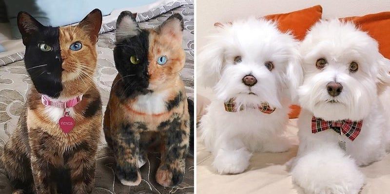 ¿Cuál es la mascota y cuál es el peluche? Imágenes: Cuddle Clones
