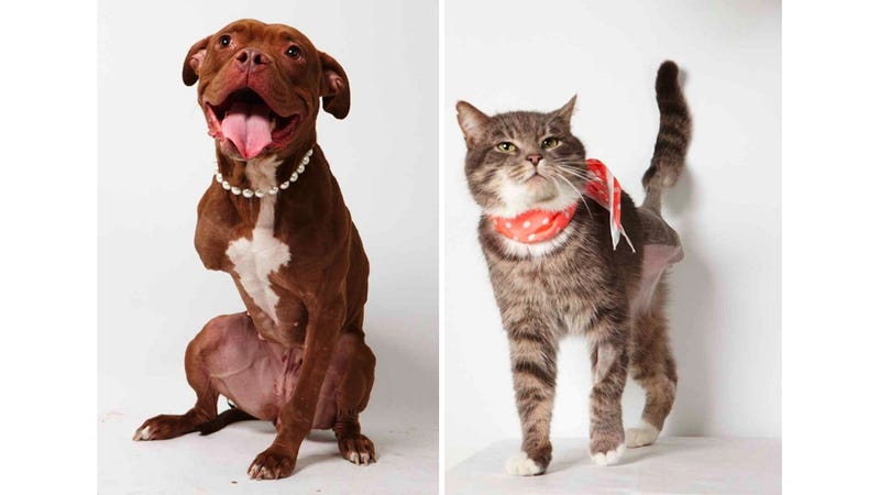 Illustration for article titled Adorable Adoptable Animals in Accessories Will Make Your Eyes Leak